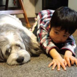 Our family dog 4th dog Paulo with my son Keito